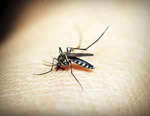 Zika Virus Is Causing A Major concern among employees legal rights to refuse work.