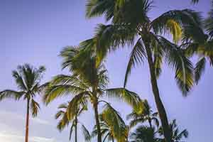Hawaii OSHA Safety Training is available both online and on-site